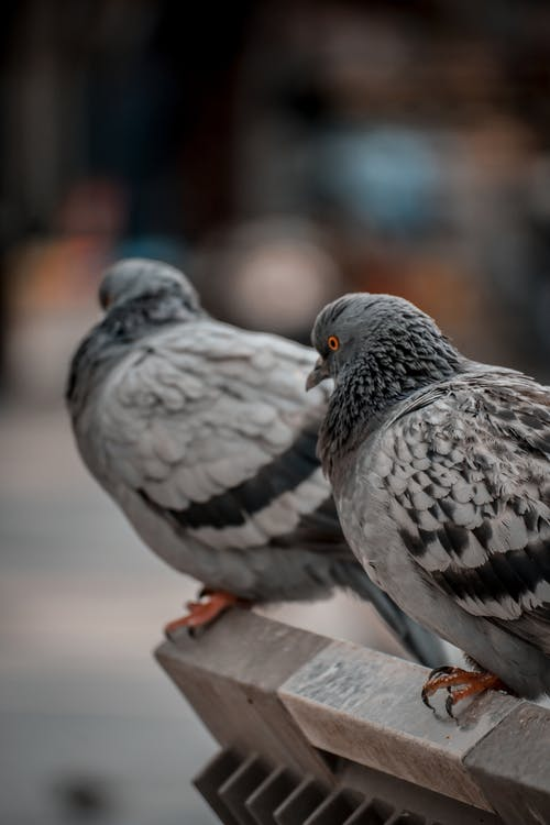 Close-Up Shot of Doves