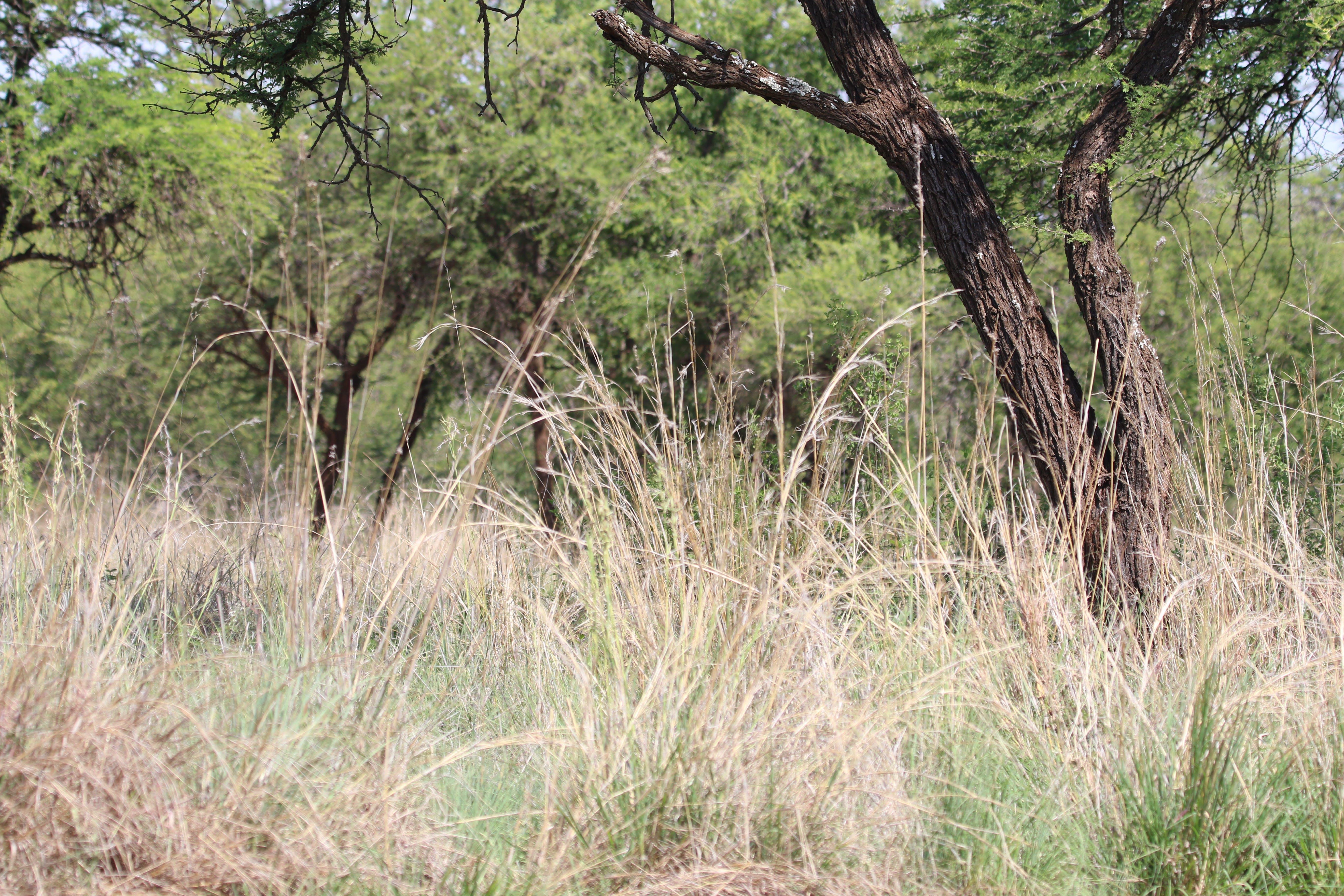 Free stock photo of nature, bush, trees, grass