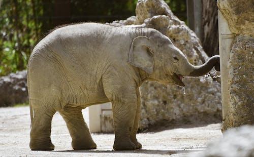 Gray Elephant Walking on Gray Concrete Floor