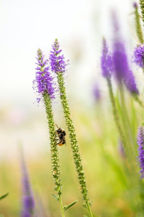 Ingyenes stockfotó botanikus, darázs, életlen témában
