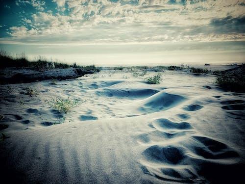 Free stock photo of beach, beach dunes, beach life