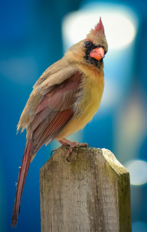 Yellow and Brown Bird on Brown Wooden Fence