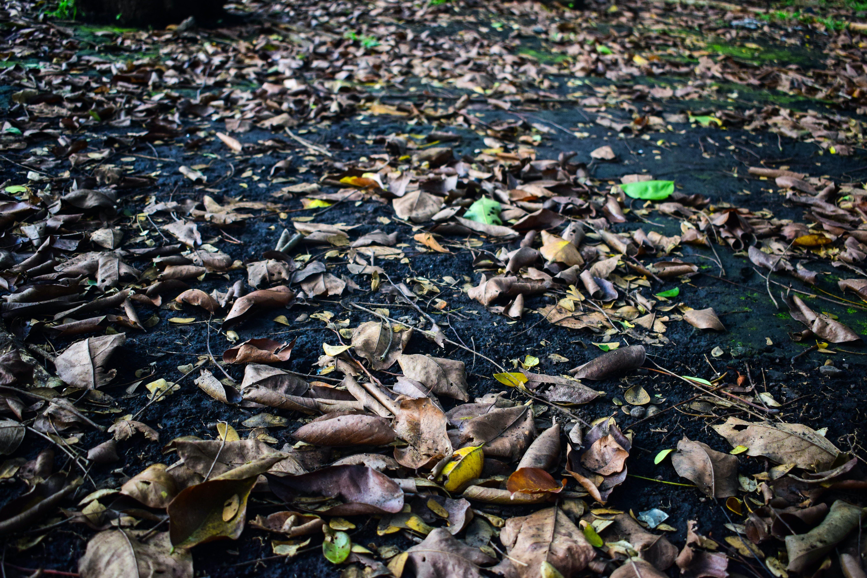 Gratis lagerfoto af nedfaldne blade, tørre blade