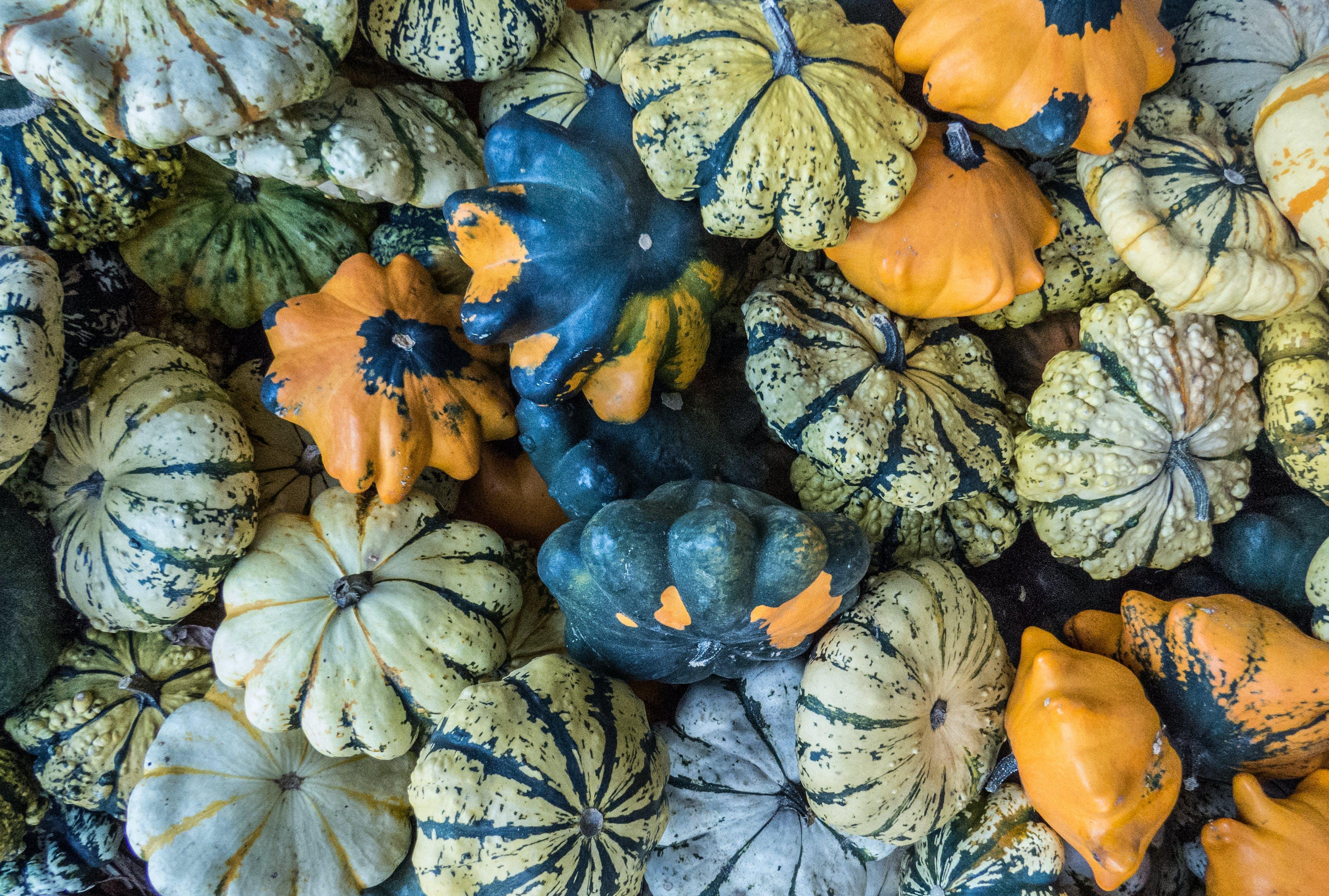 Free stock photo of blue, fruit, still life