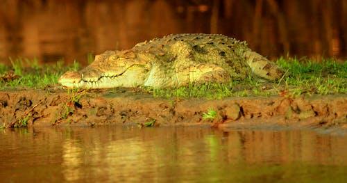 Free stock photo of africa, Crocodile, inclusive safari walking safari