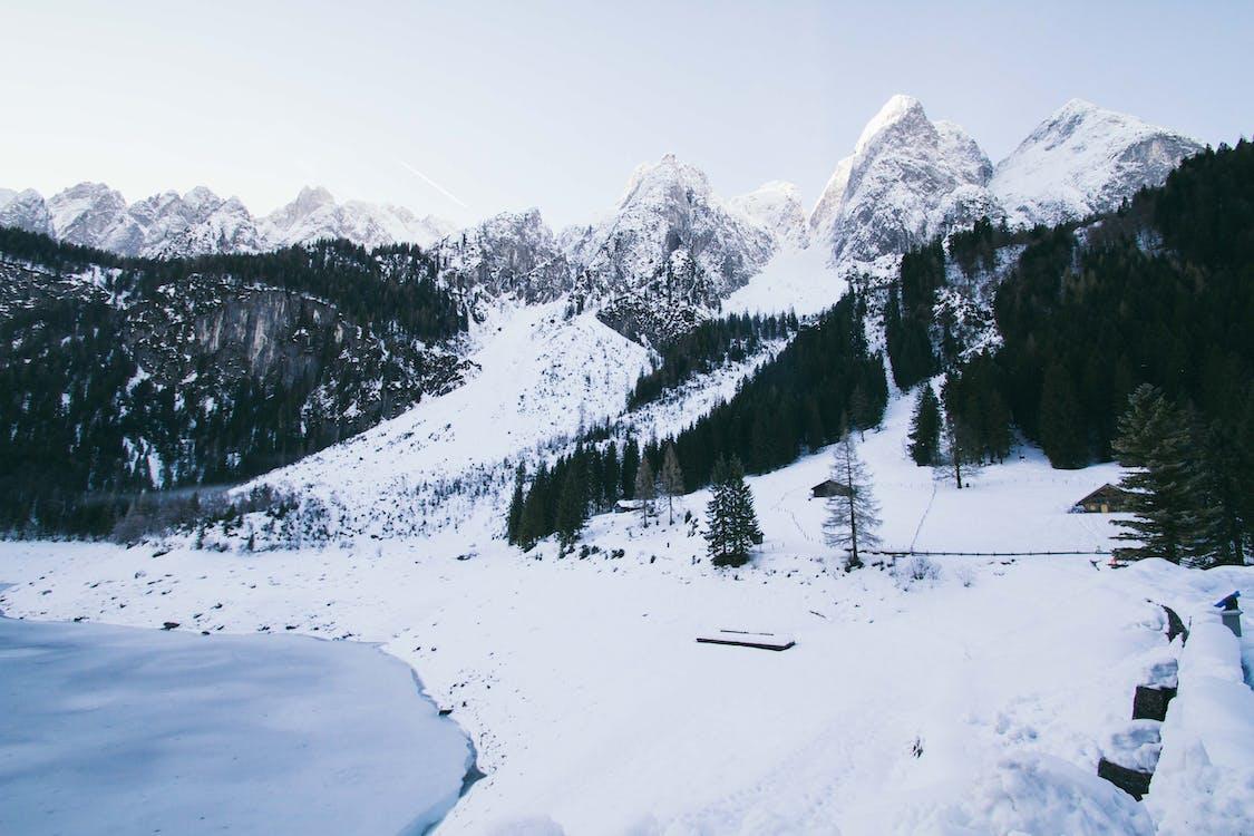 alpin, barrträd, bergen