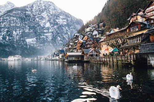 Základová fotografie zdarma na téma architektura, čeření, domy, hory