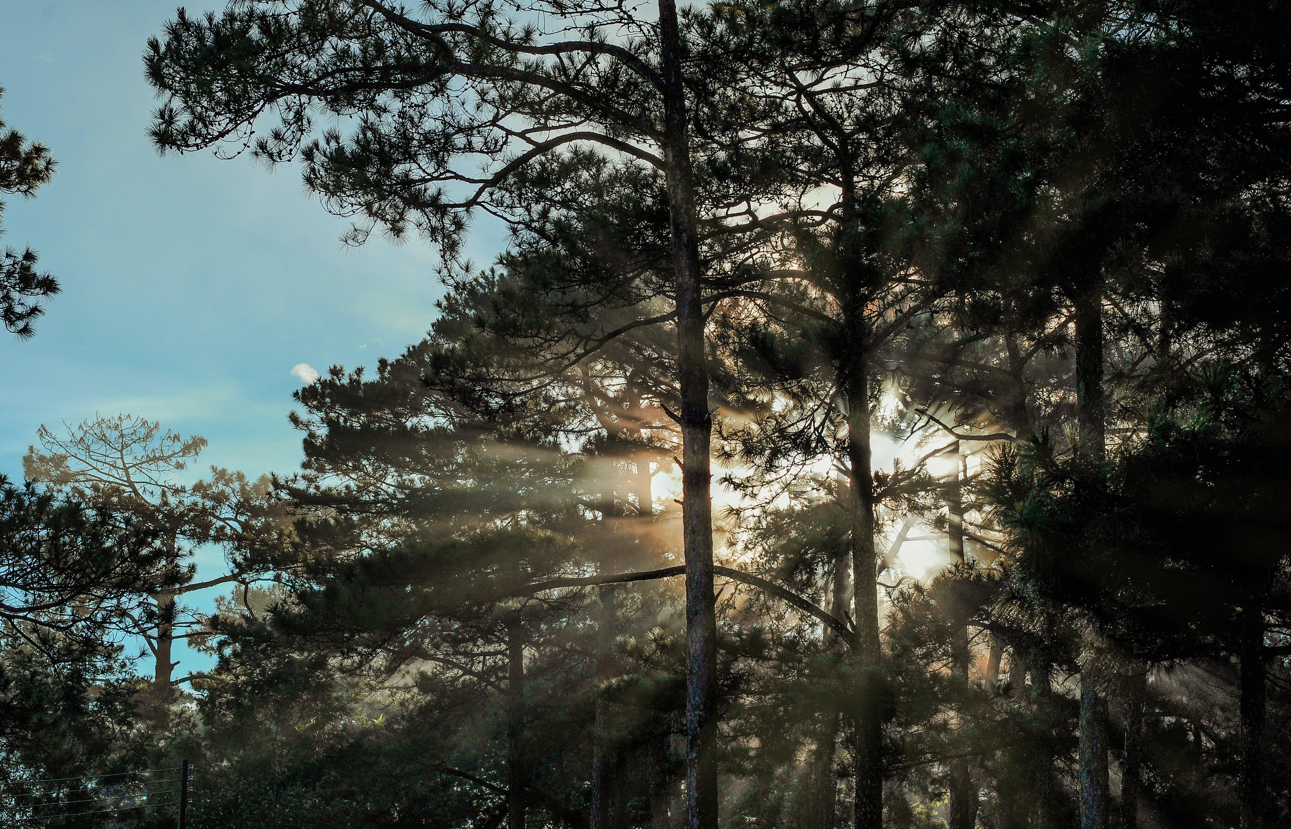 Ảnh lưu trữ miễn phí về ánh sáng ban ngày, bầu trời, bình minh, cây