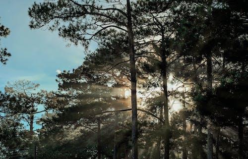 分支機構, 天性, 天空, 太陽 的 免费素材照片