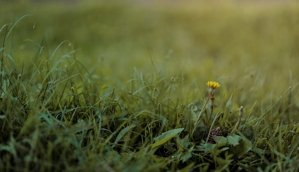 Selective Photography of Green Grass and Flower