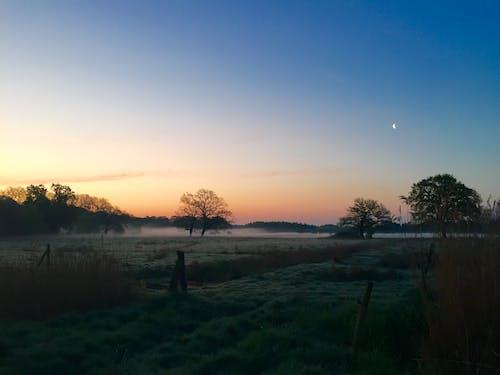 Imagine de stoc gratuită din arbori, câmp, ceață, gard