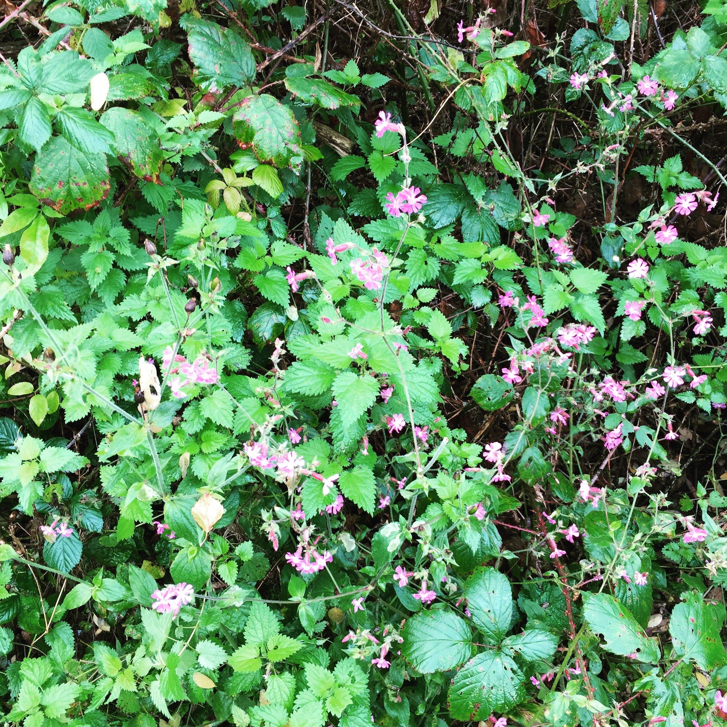 Kostenloses Stock Foto zu busch, frisch, frühling, gebüsch