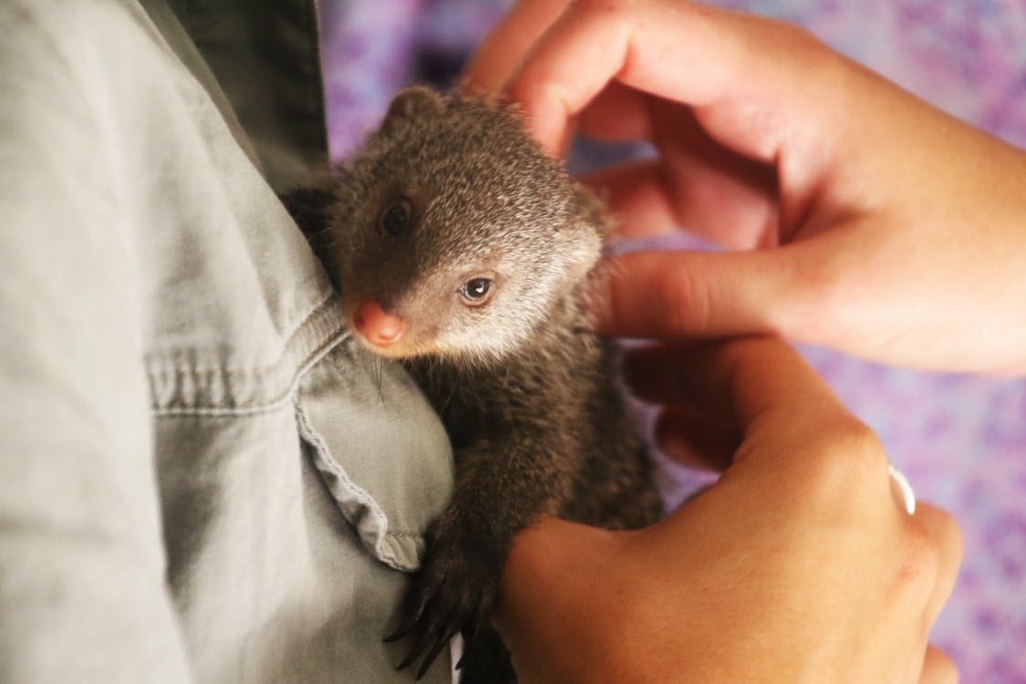 Person Holding Weasel