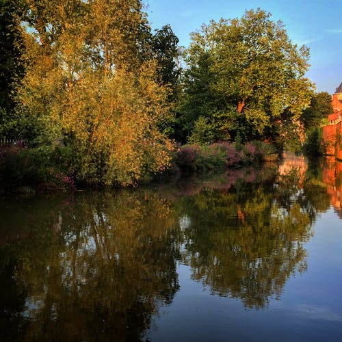 Immagine gratuita di acqua, alberi, albero, riflesso