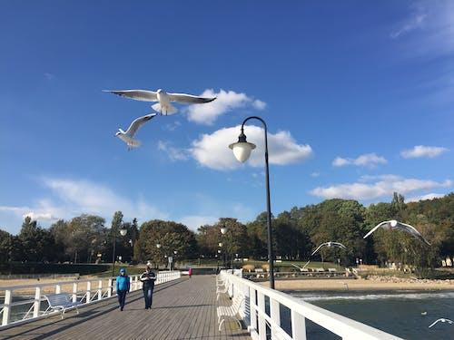 Immagine gratuita di attacco di uccello, cielo, gabbiano, Mar Baltico