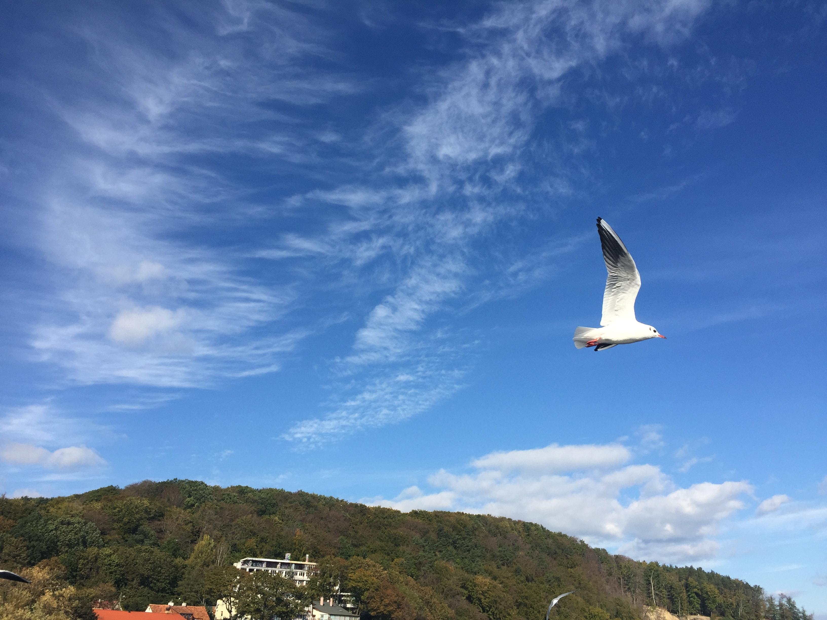 Free stock photo of Baltic Sea, sea, sea bird