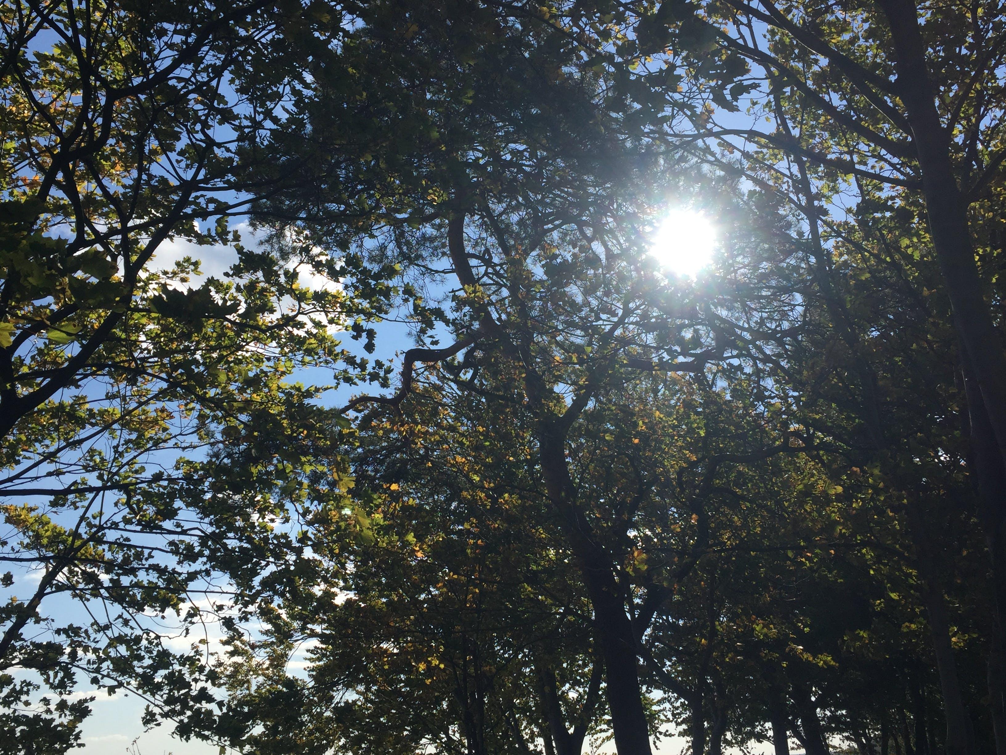 Kostenloses Stock Foto zu baum, himmel, lichtreflexionen, sonne