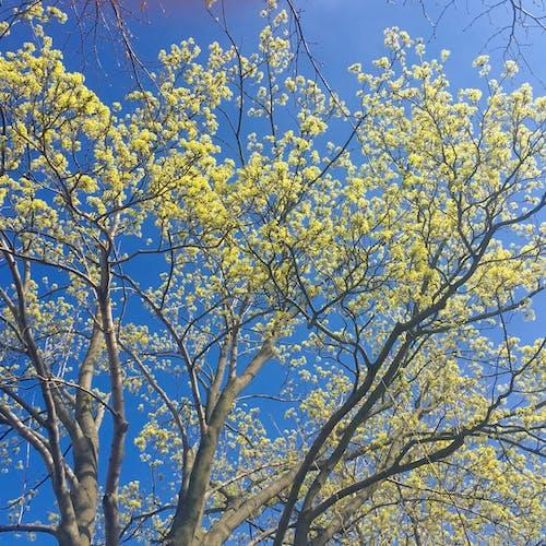 Immagine gratuita di alberi, albero, cielo, colore vivido
