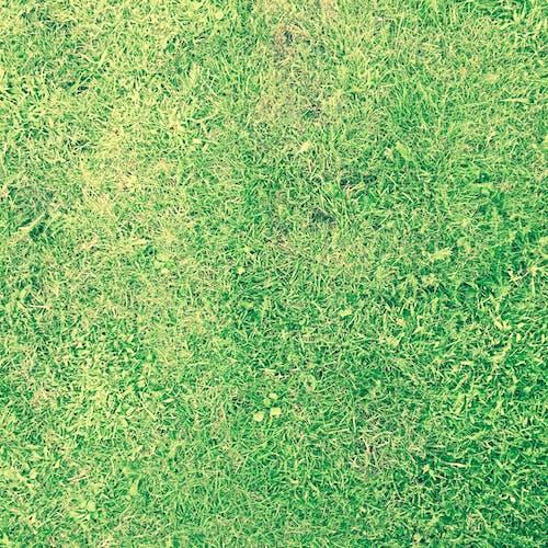 Immagine gratuita di erba, verde