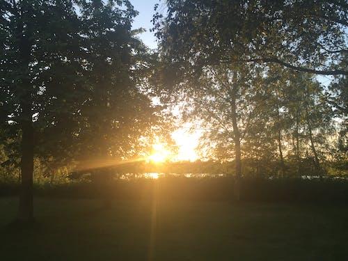 Immagine gratuita di alberi, amore, cielo, estate