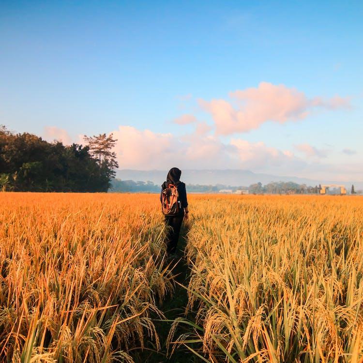 åkermark, äventyr, beskära