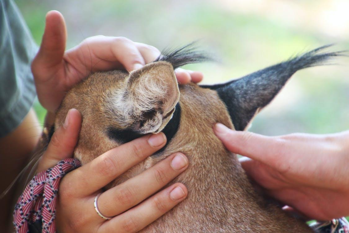 Closeup Photo of Brown Fur Animal