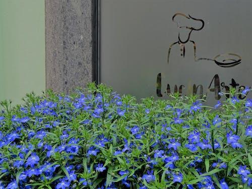 Immagine gratuita di azzurro, blu