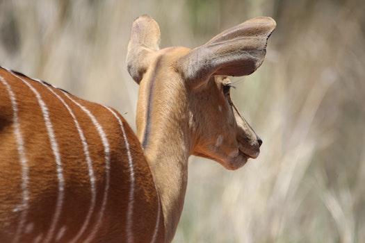 Shallow Focus on Deer