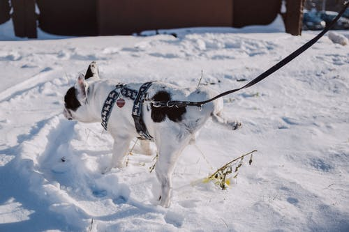 Foto stok gratis alam, anjing, beku, cuaca