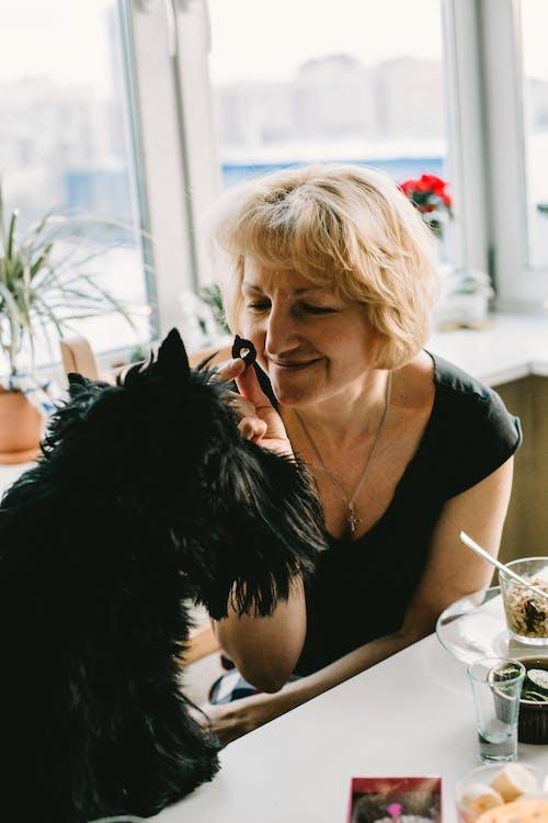 Imagine de stoc gratuită din animal, animal de casă, câine, cameră