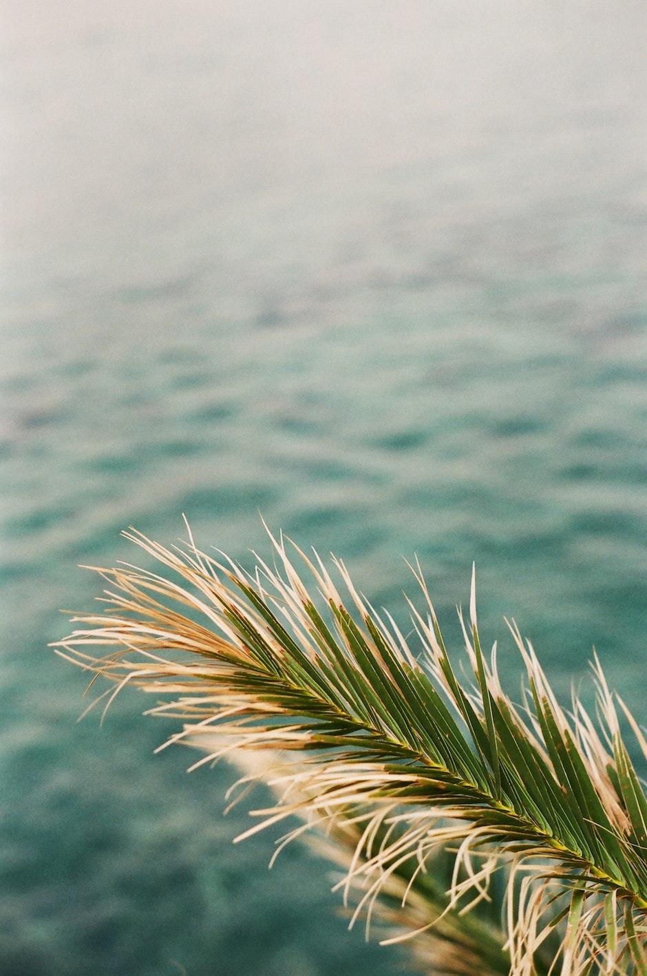 Closeup Photo of Green Palm Tree