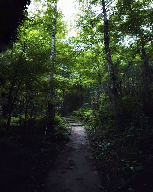 Narrow footpath between green forest with tall trees