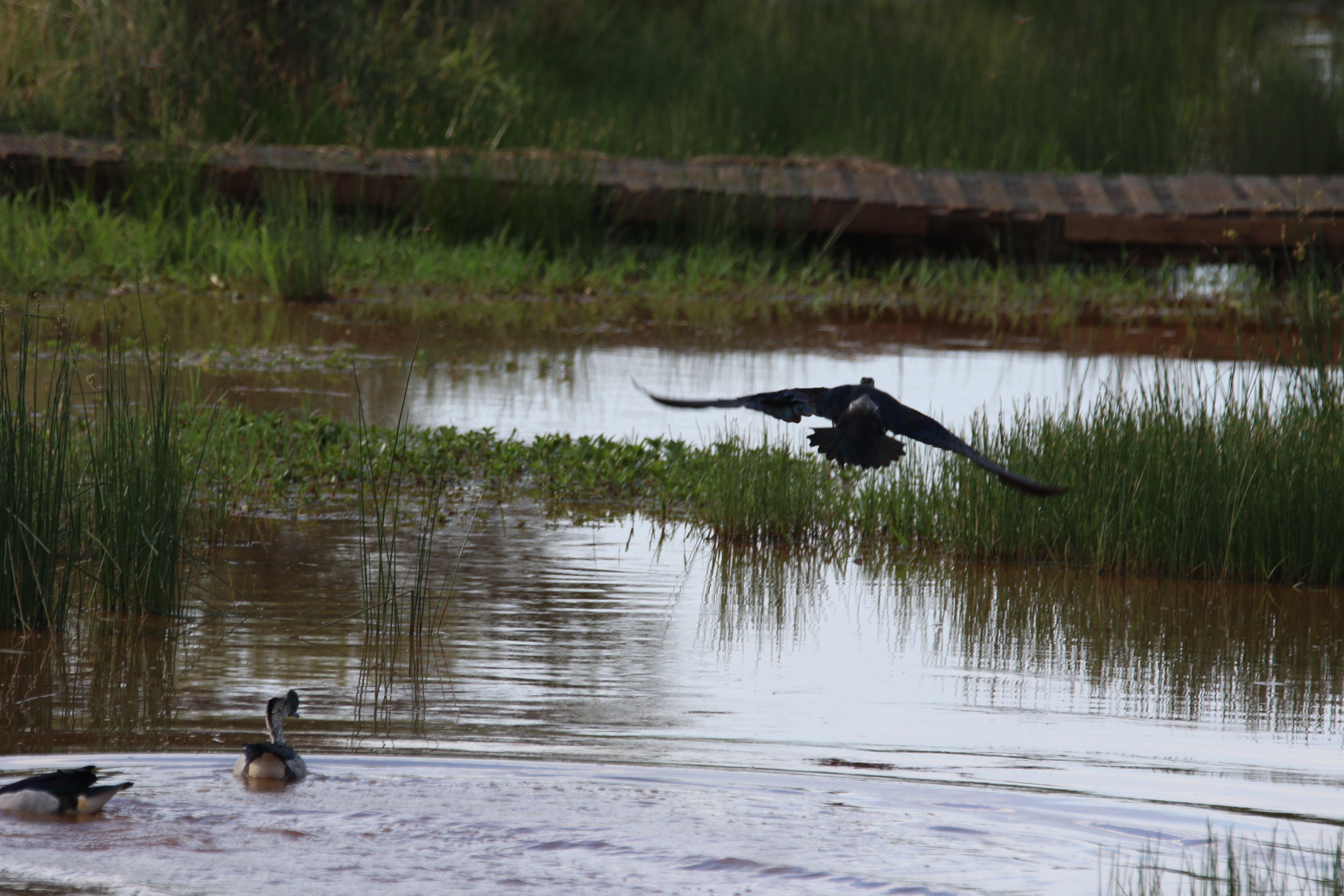 Free stock photo of nature, water, bush, animals