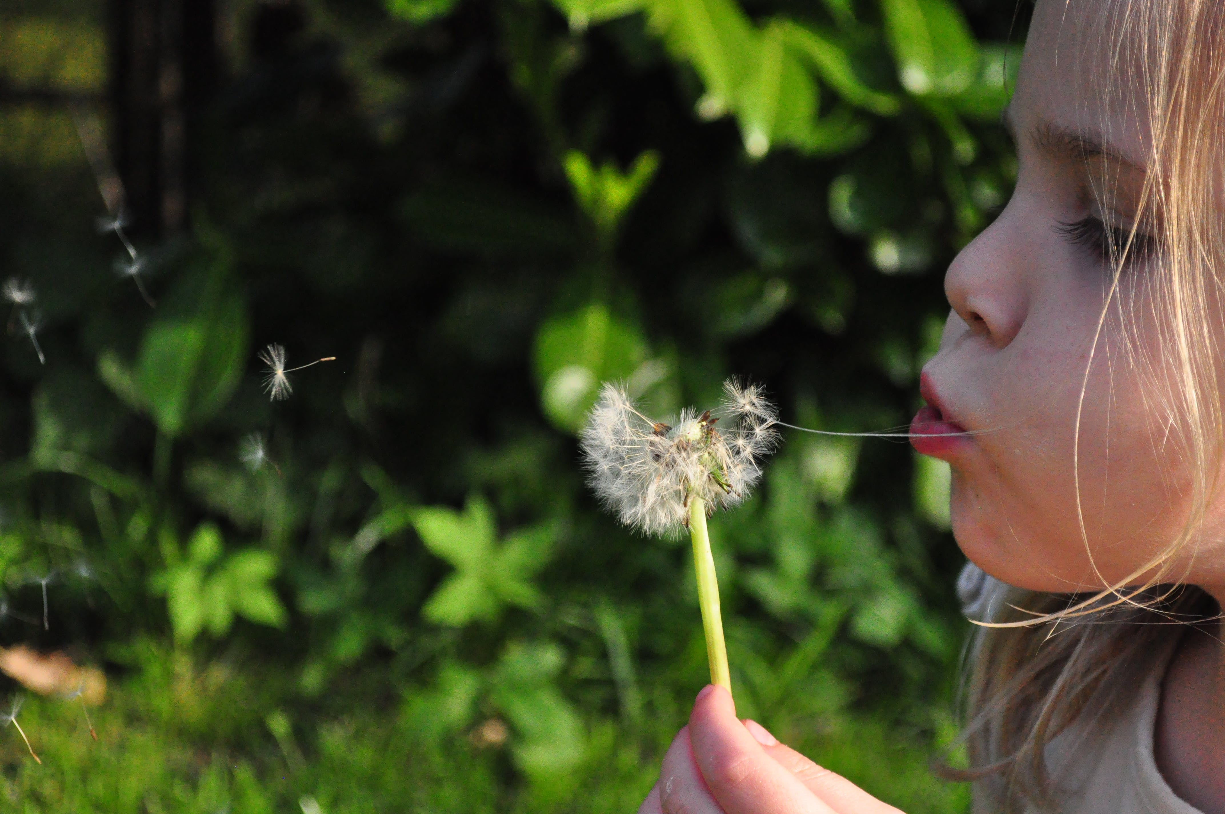 Girl Blowing White Dandelion Flower