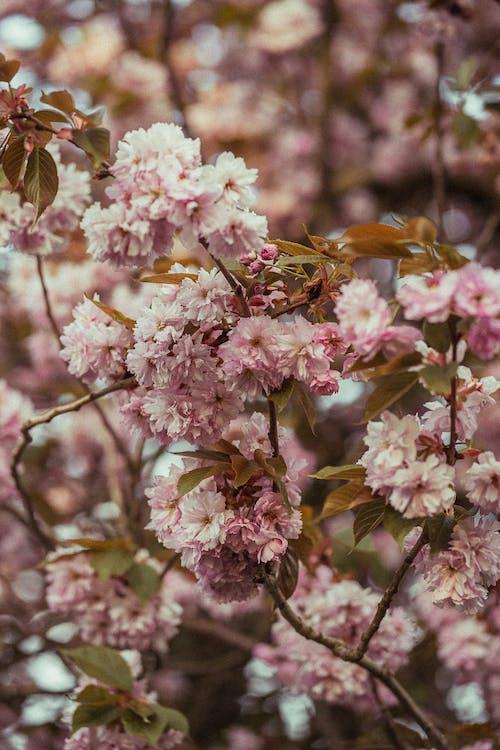 Fotos de stock gratuitas de árbol, bonito, botánica