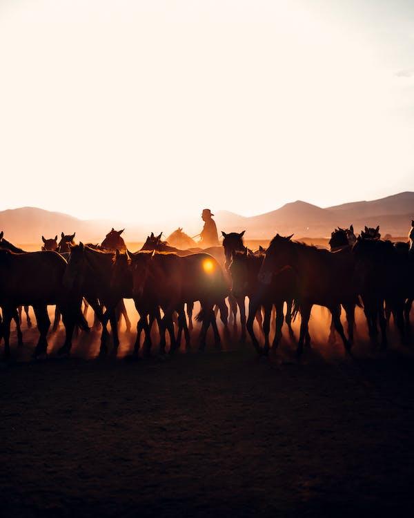 Foto stok gratis alam, backlit, bagus