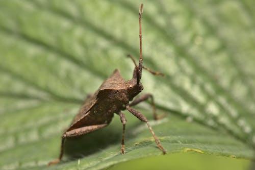 Brown and Black Grasshopper on Green Leaf