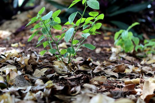 Fotobanka sbezplatnými fotkami na tému detailný záber, prírodný, rastliny, ulica