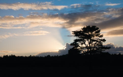 Free stock photo of sunset sky, trees