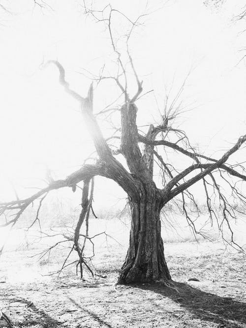 下落, 公園, 冬季 的 免费素材图片