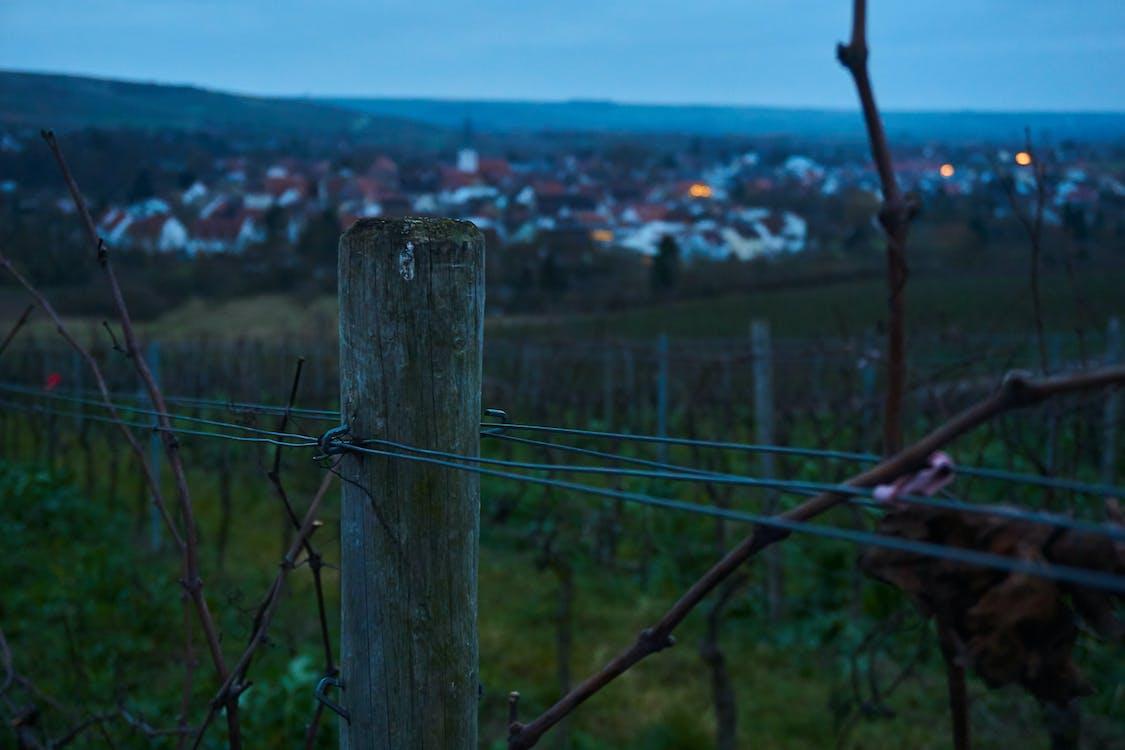 dorp, dorpje, wijngaard