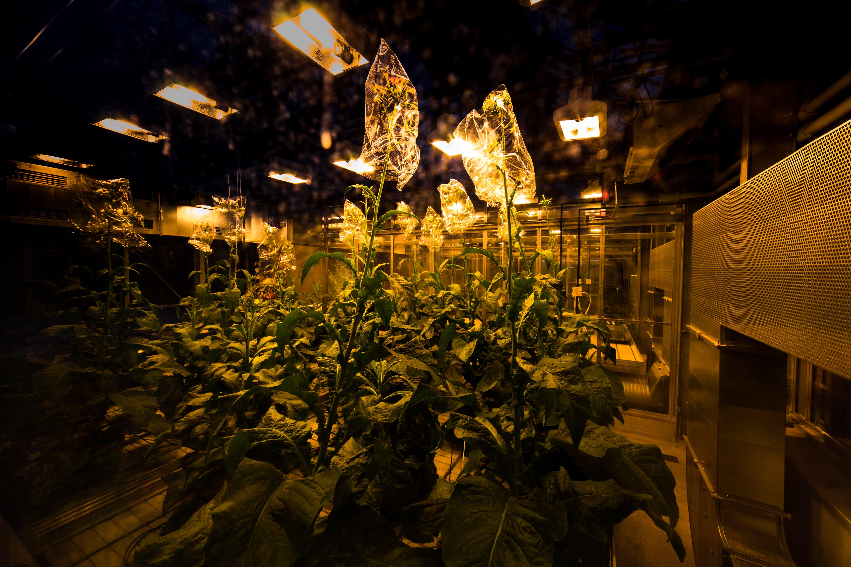 Gratis stockfoto met achtergelaten, bloeiende plant, donker, fabrieken