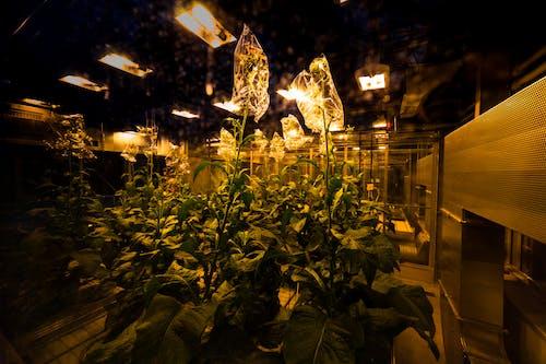 Free stock photo of abandoned, chemistry, dark, flowering plant