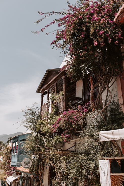 Pink Flowers on Brown Wooden House