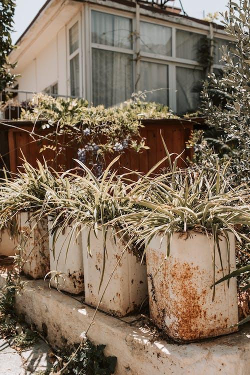 Immagine gratuita di abbandonato, architettura, crescita