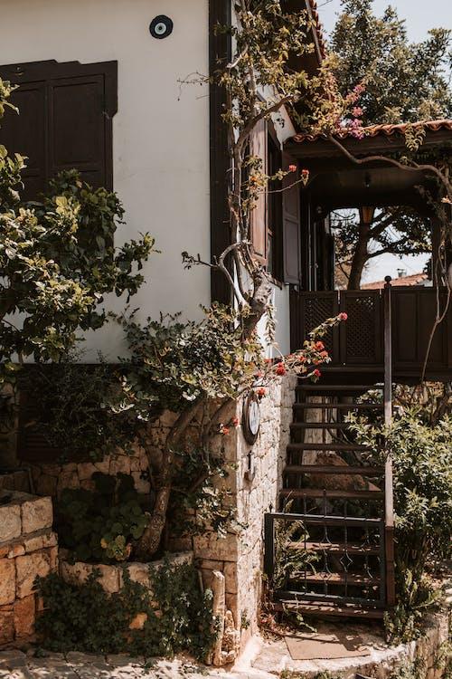 Green Plants Outside The House
