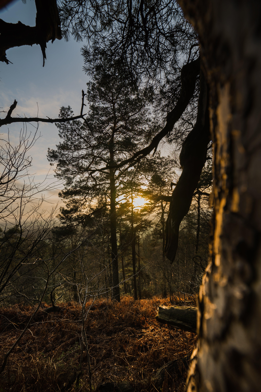 Základová fotografie zdarma na téma dramatická obloha, hdr, krajina, les