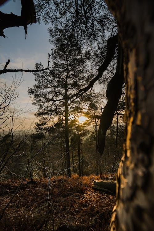 HDR, 겨울, 경치, 눈 부신 태양의 무료 스톡 사진