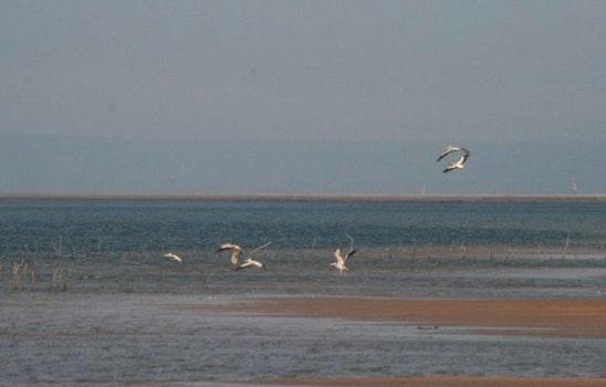 Free stock photo of nature, ocean, birds, pink