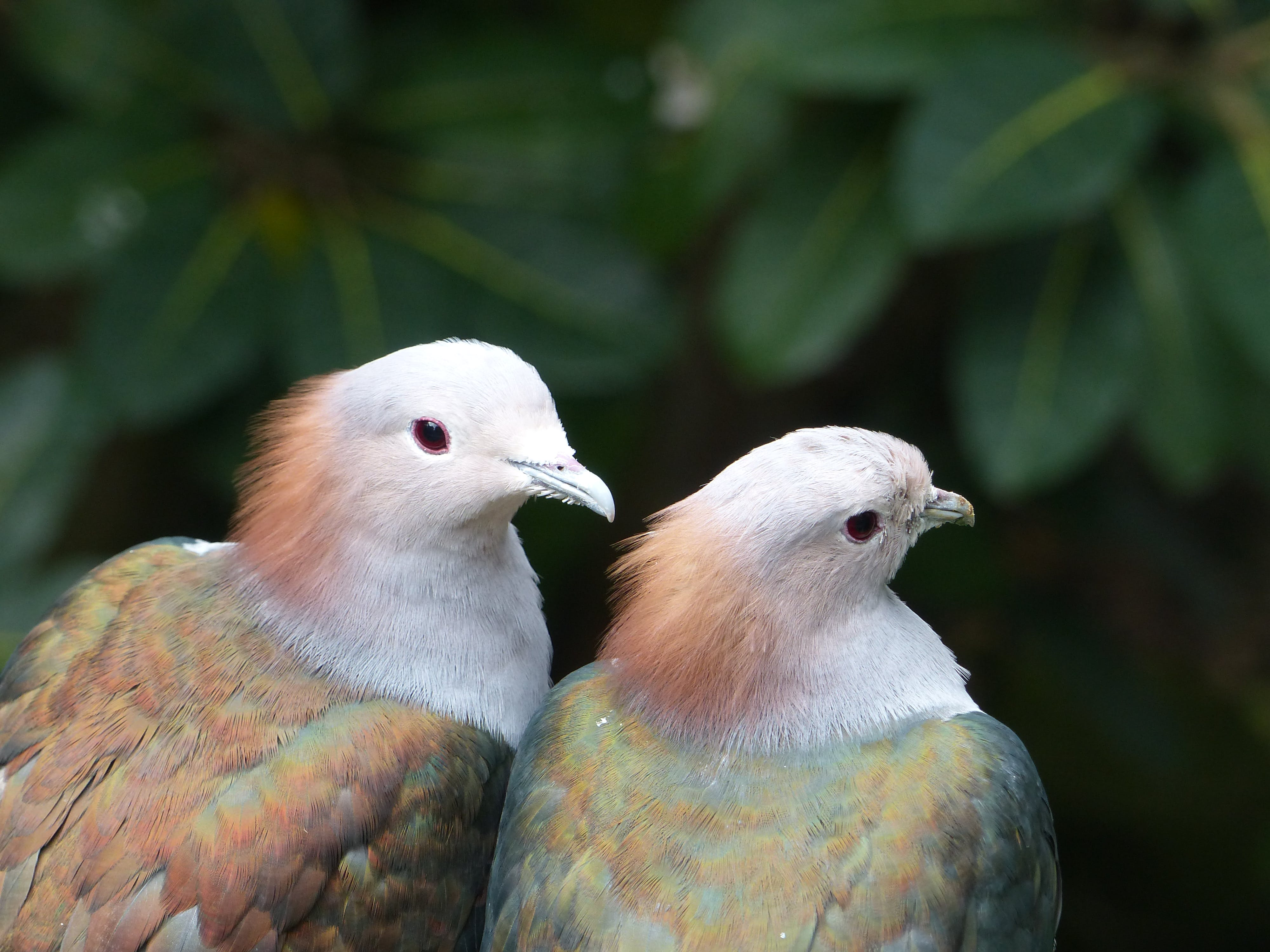 Two White-brown-and-green Birds Selective Focus Photography